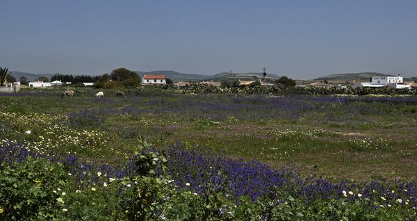 flower meadow at a frame surfcamp andalusia