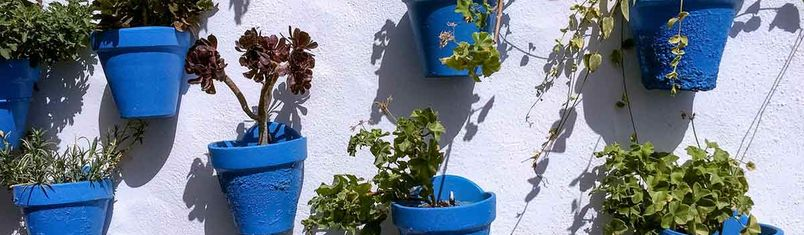 Blue flower pots are typical for Conil de la Frontera